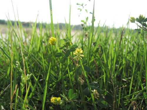 三田グラウンドの花