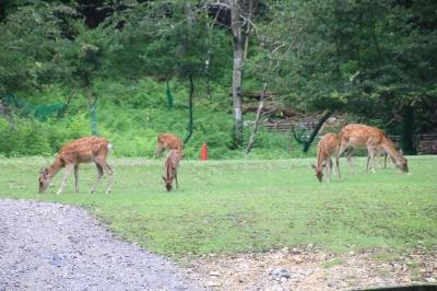 鹿 (2).JPG