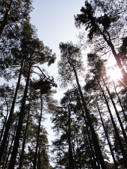 森の墓地 アスプルンド