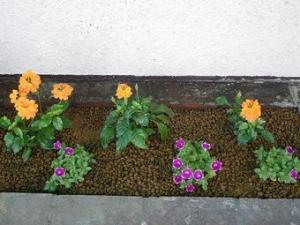 店の前の花壇