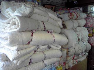 綿がいっぱいだ〜!