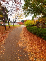 鶴見緑地落葉