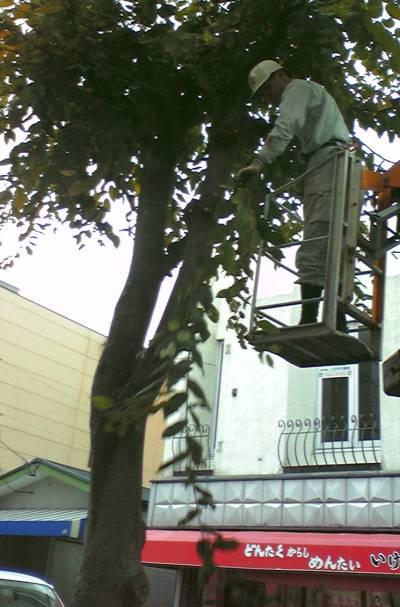 街路樹の剪定