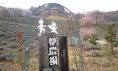 長野県池田町陸郷のヤマザクラ
