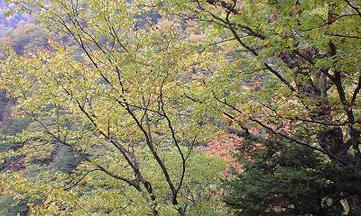 信州・中房温泉への森