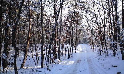 信州・安曇野の雪の散歩道