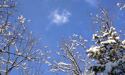 信州・安曇野の雪の散歩道の樹木