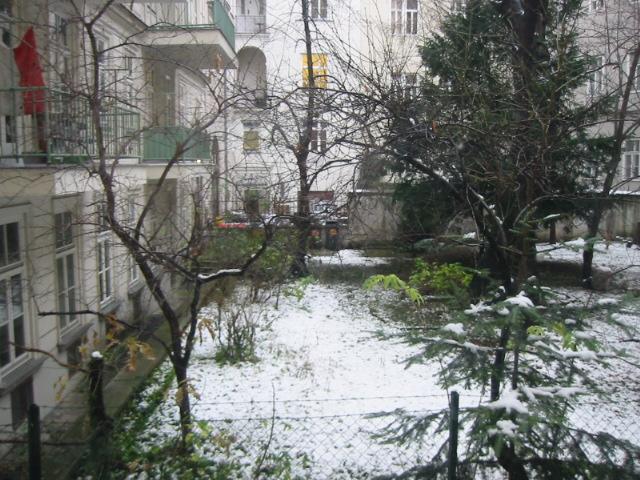 事務所の庭