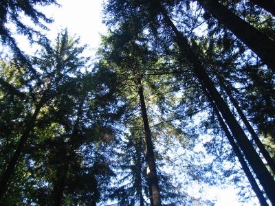 オーストリアの森林