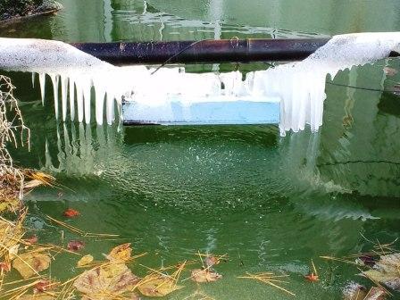 学校の池の氷柱