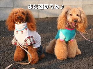 ロワくん&COCO3