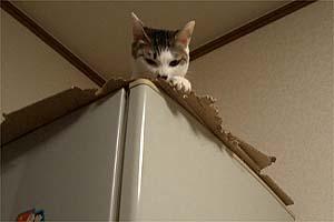 デヴィ子冷蔵庫の上