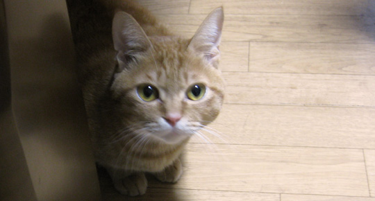 odasaki_cat