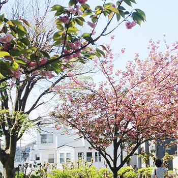 0425桜