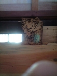天井のバウムクーヘン