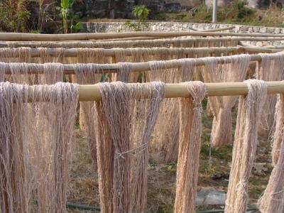 麻繊維の乾燥.JPG