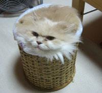 うちの猫ではないんですが(笑)