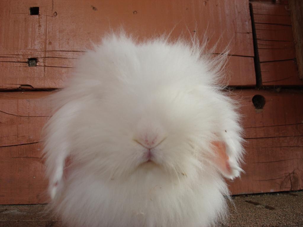 モフモフ ウサギ