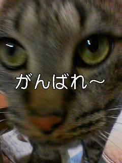 081110_1645~001_001.jpg