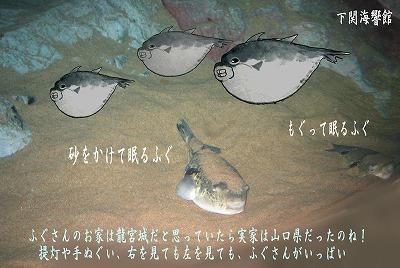 下関水族館 海響館のふぐ