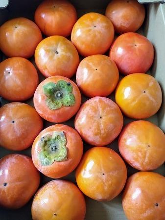 いただきものの柿