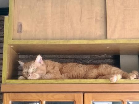 やる気なしの猫