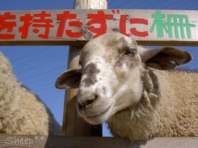 羊さんだよ〜