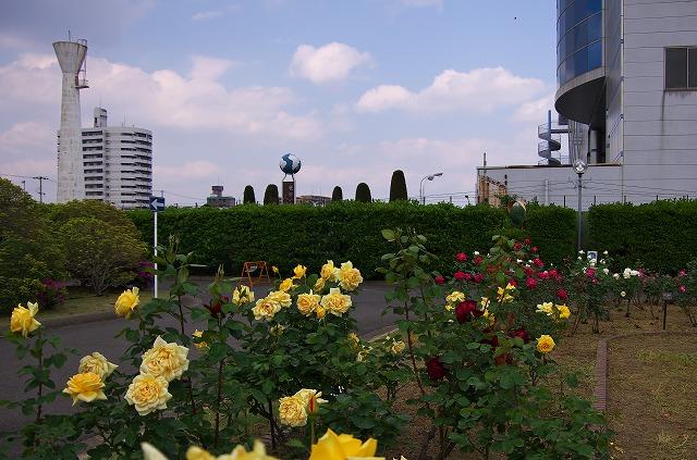 住之江下水処理場 薔薇園