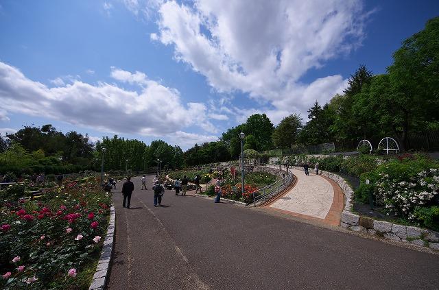 鶴見緑地 バラ園