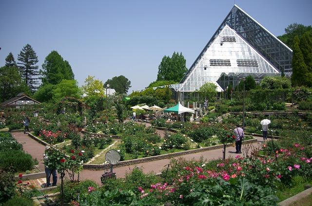 花の文化園 バラ園