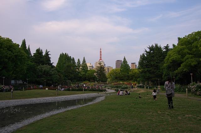 靭公園 バラ園