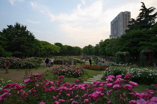 靭公園 薔薇園