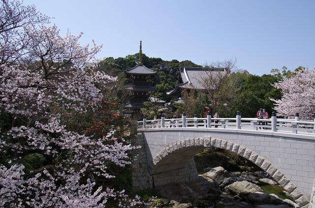 龍谷山 水間寺 桜 お花見