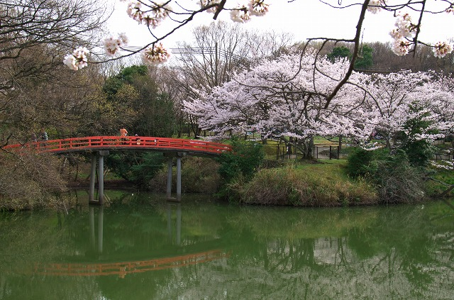 水間公園 桜 お花見