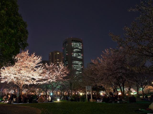 OAP 毛馬桜之宮公園 観桜ナイター 夜桜 花見