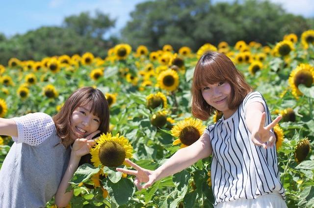 あわじ花さじき 向日葵