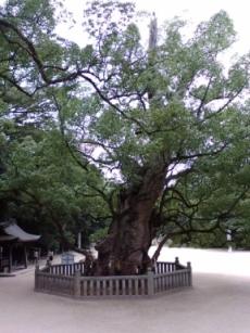 樹齢三千年の楠