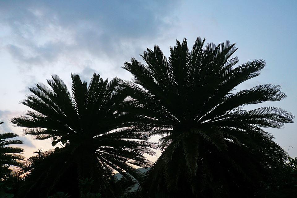 日の出頃1