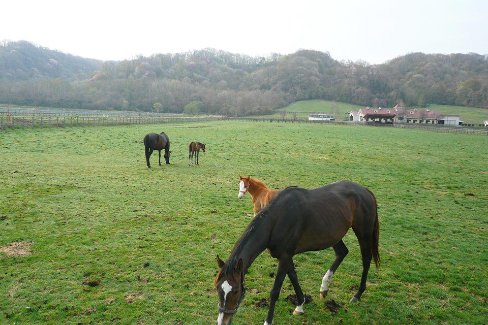 早朝の牧場