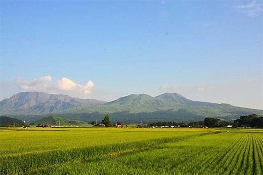 「熊本県産 森のくまさん」入荷しました。