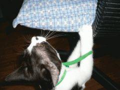 椅子の座布団で爪とぎ