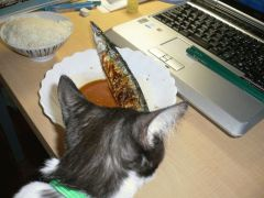 秋刀魚と猫。猫と秋刀魚。