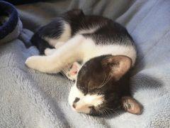 11月24日。眠り猫。