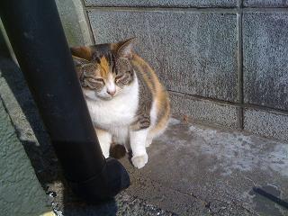 チビ猫ミケにゃん。