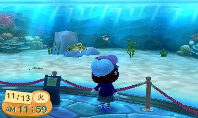 どうぶつの森 博物館 魚