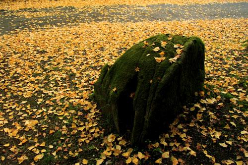 秋、積もりゆく