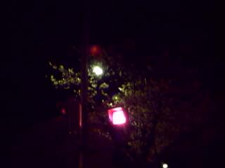 夜桜赤信号