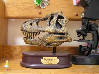 ティラノサウルス 頭骨