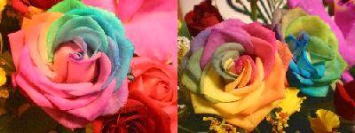rainbow rese