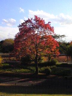 日本庭園 つつじヶ丘からのはす池.JPG